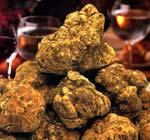 truffe blanche
